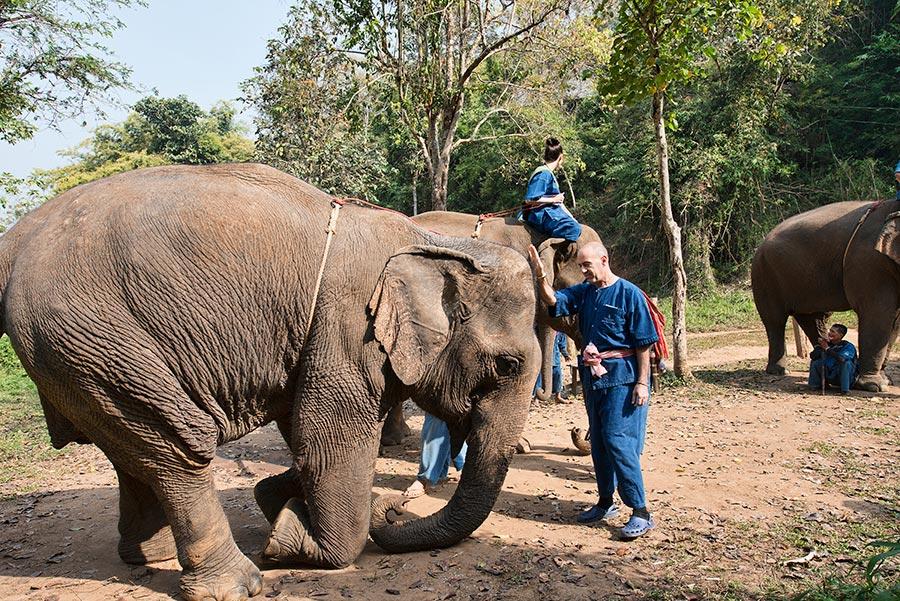 Elephant Etiquette